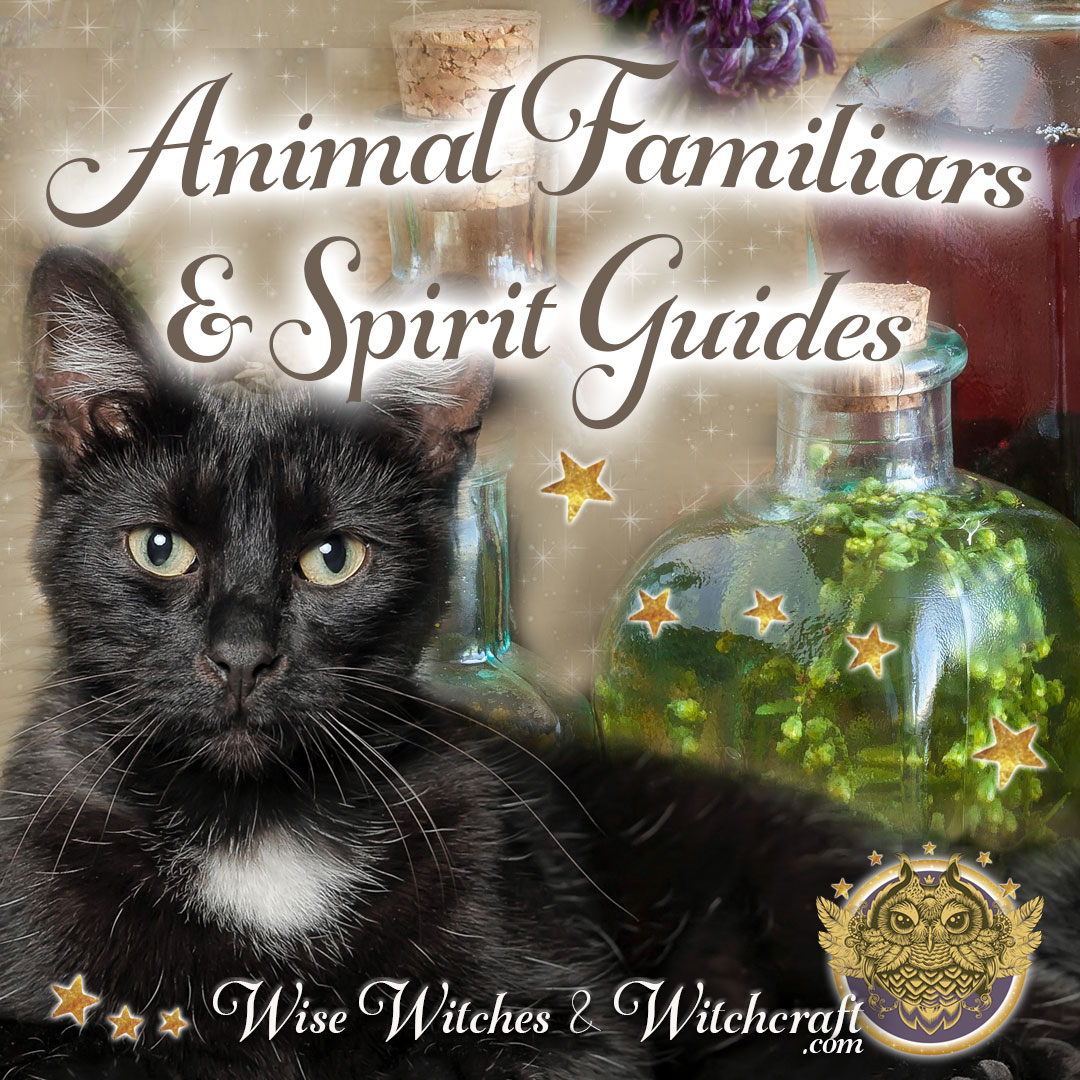 Spirit Animal & Familiars | Spirit Animal Meanings for the